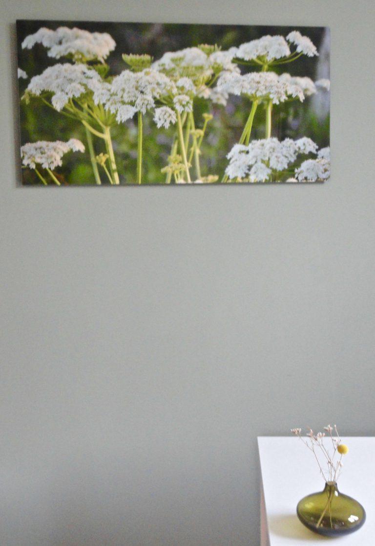 Schafgarbe 100 x 50
